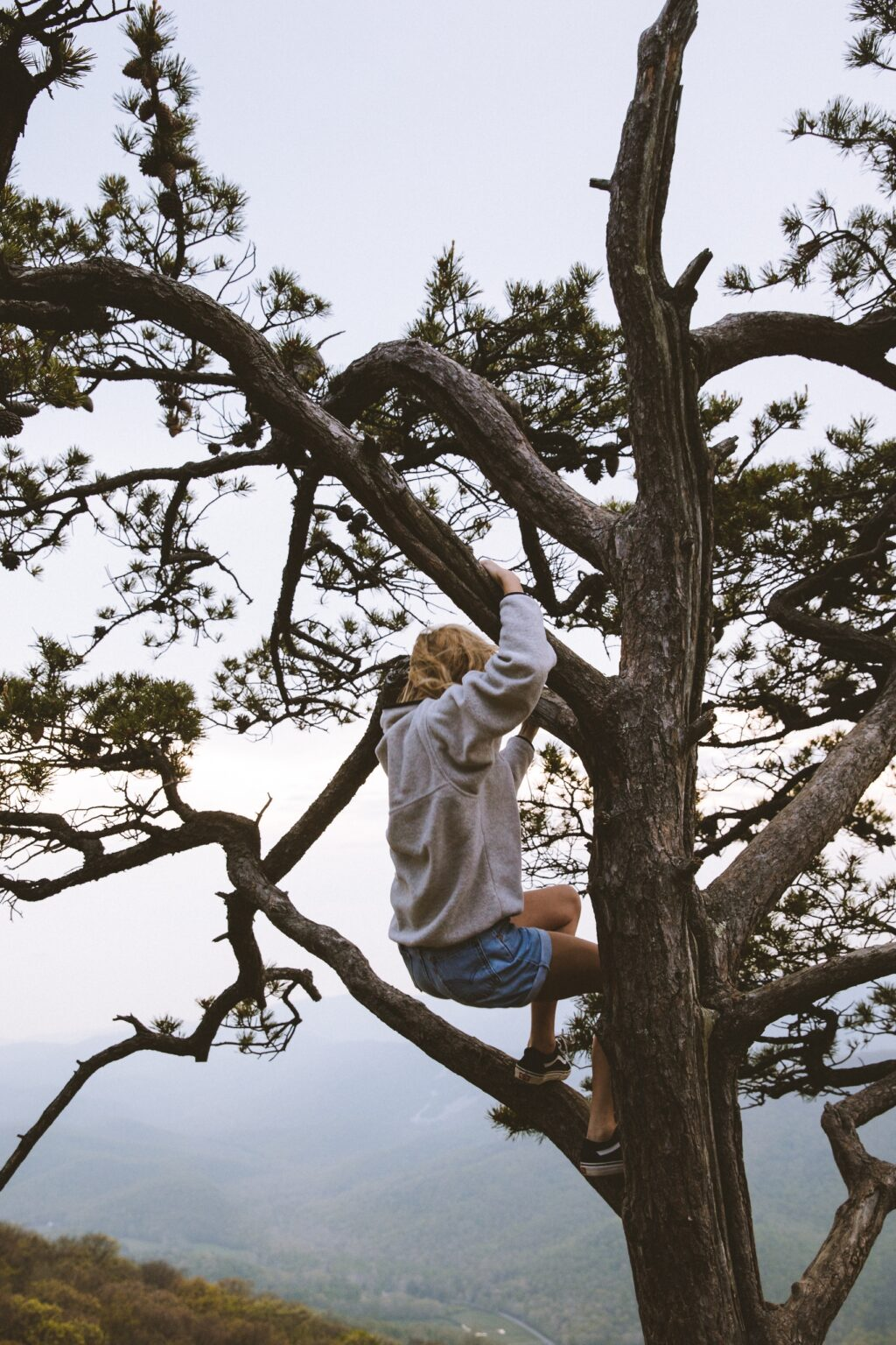 Person in tree exploring trying new things climbing hopeful