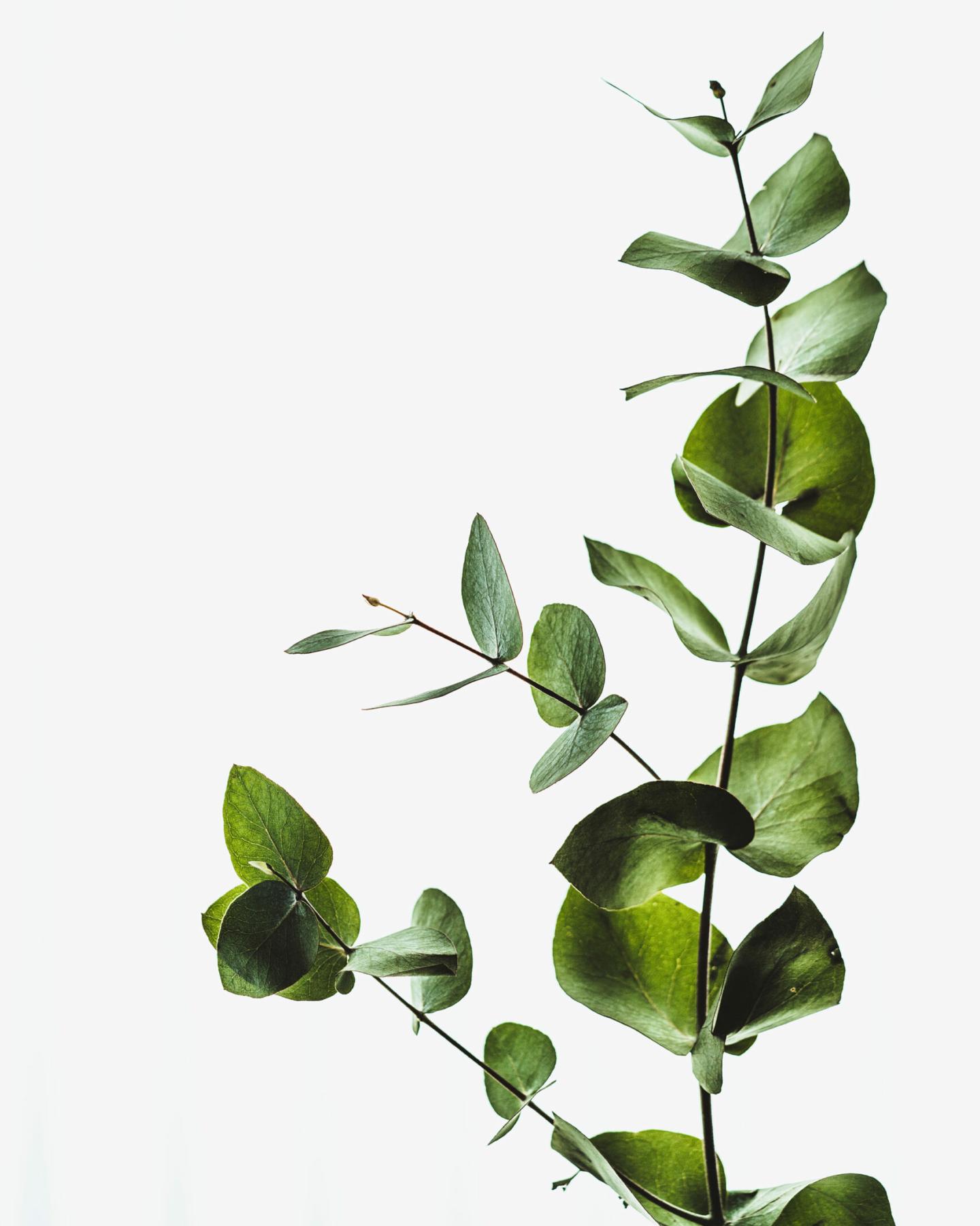 ENSEMBL Sustainable Partnerships growing vine