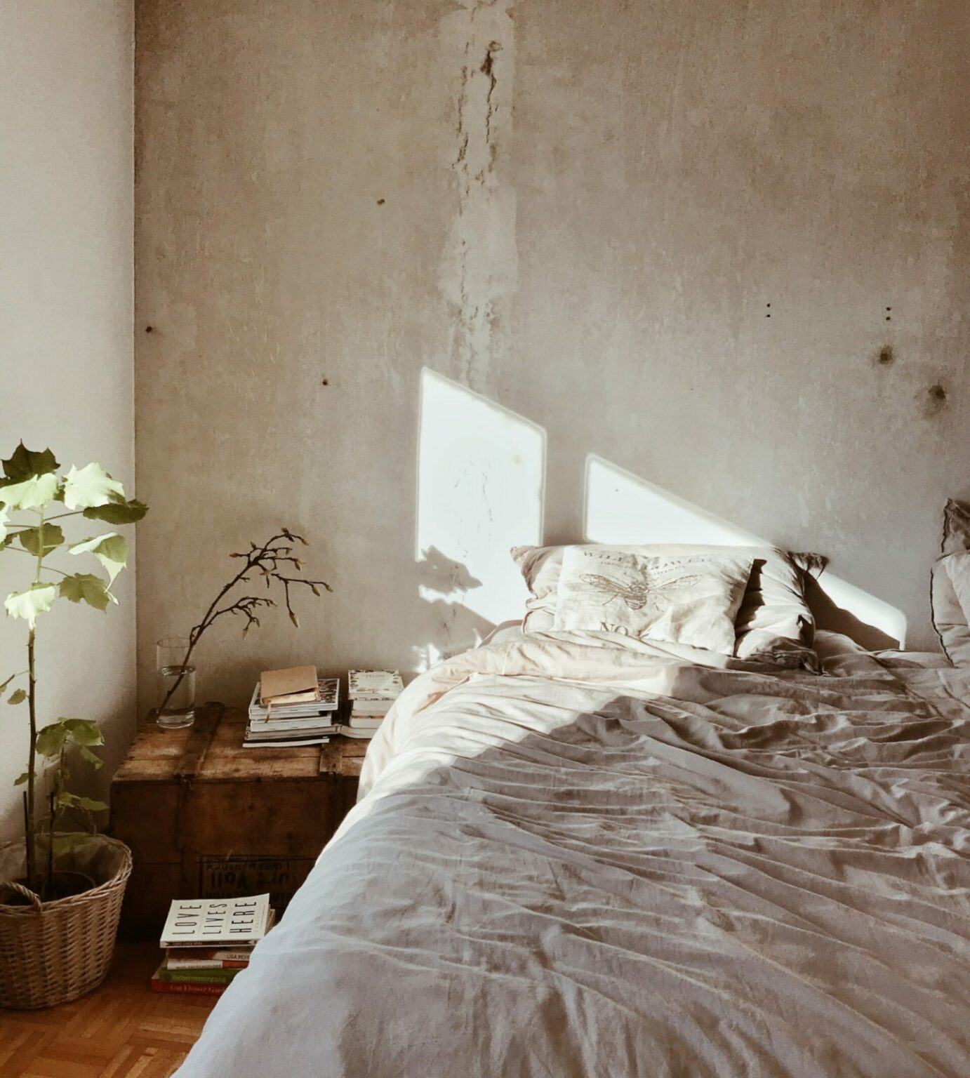 Bed in the sunlight with plant