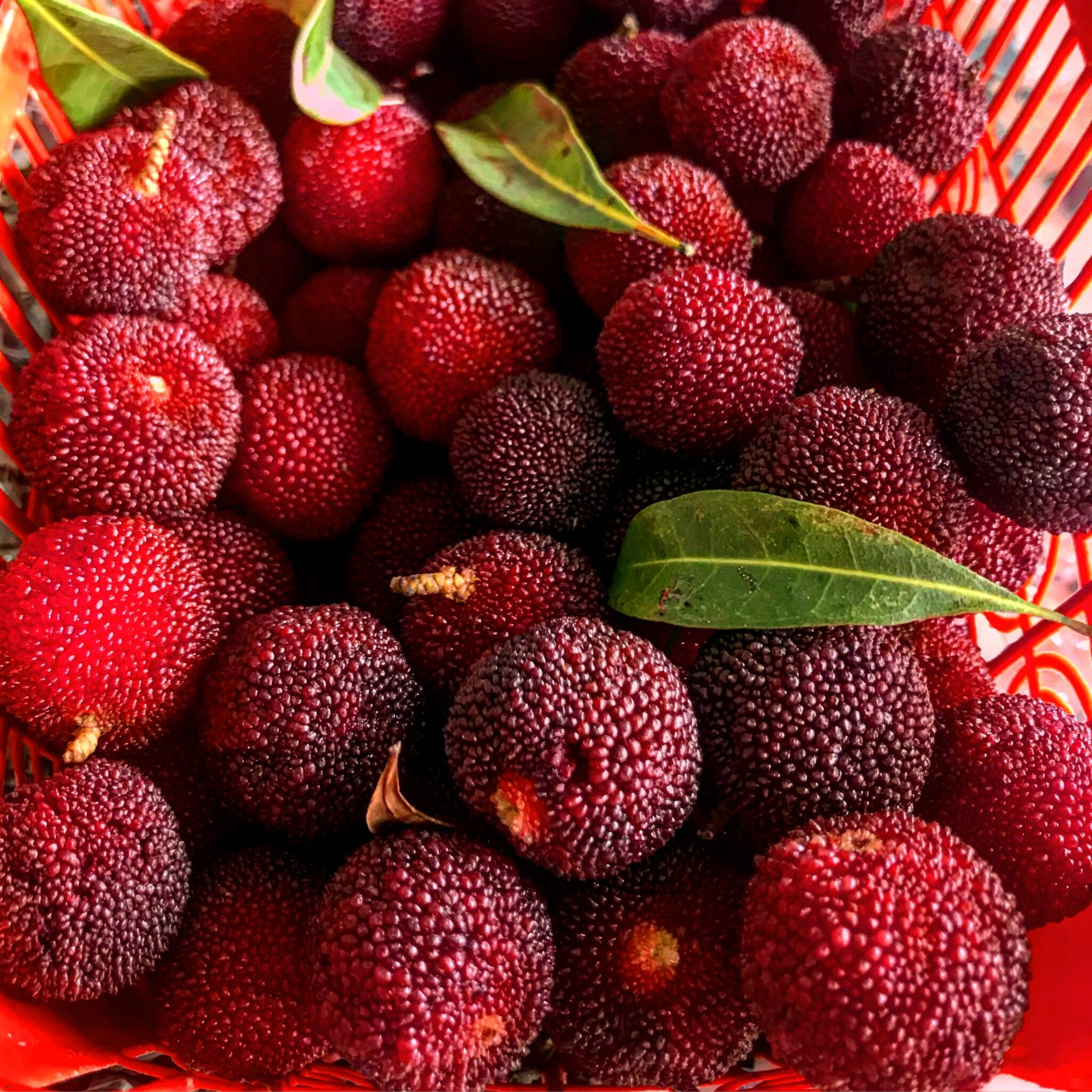 Red lychee fruit